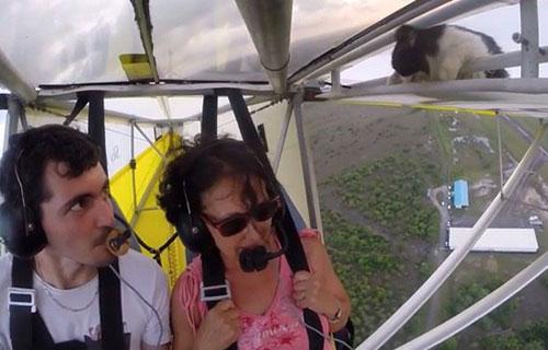 Кот на крыле частного самолета
